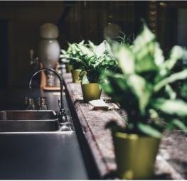 Végétaliser son logement